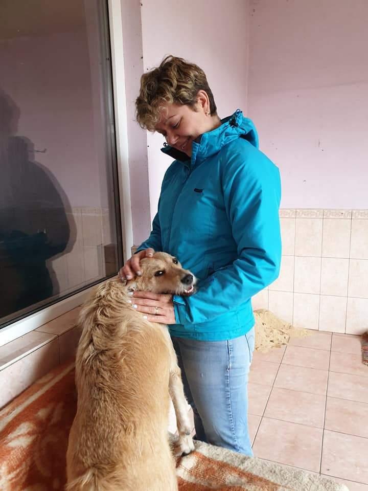 «Біля 90% вуличних собак і котів в Україні колись були домашніми»