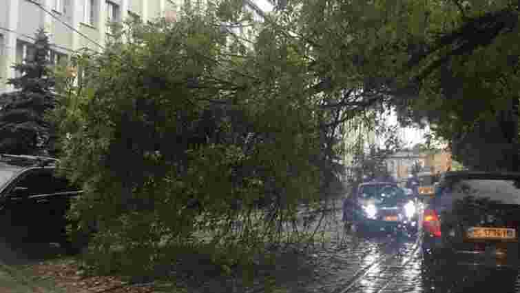 Через падіння дерева на вул. Вітовського не курсують трамваї