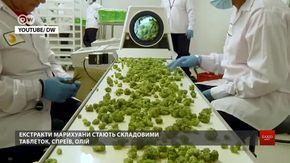 Як львів'яни реагують на ймовірність легалізації медичного канабісу