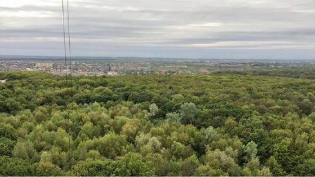 «У мене є мрія – поселити у Львові сім'ю зубрів»