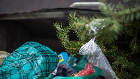 Як цивілізовано утилізувати новорічні ялинки у Львові