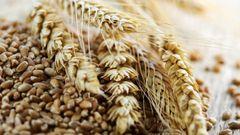 Україна стала другим експортером зерна у світі після США