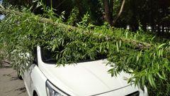 Львів'янин відсудив 106 тис. грн у міськради за повалене на машину дерево