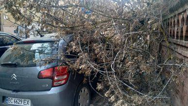 Львів'янка відсудила у «Львівської політехніки» 73 тис. грн за повалене на машину дерево