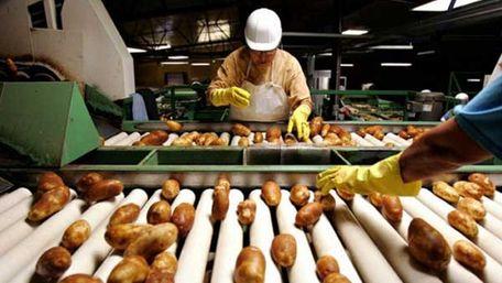 Завод з безвідходної переробки картоплі збудують у Глинянах
