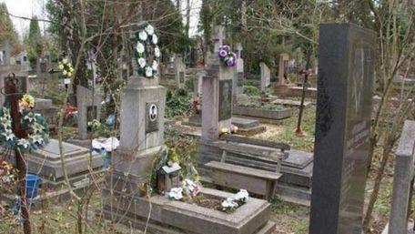 У Львові вирубають 26 га лісу під нові кладовища