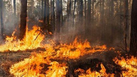 На Львівщині оголосили надзвичайну пожежну небезпеку