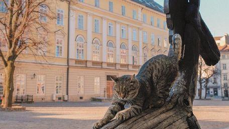 Головні новини Львова за 14 травня