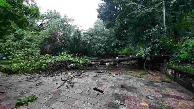 Негода зламала 118 дерев та пошкодила 24 дахи у Львові