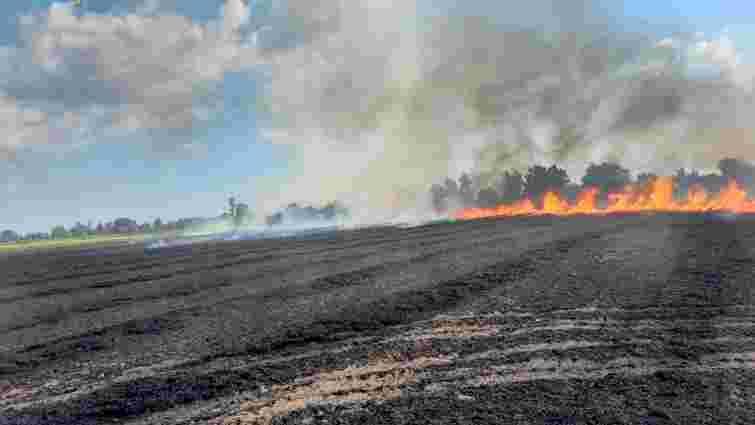 На пшеничному полі поблизу Ужгорода виникла масштабна пожежа