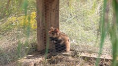 У Чернівецьку область для розмноження завезли зграю диких хом'яків