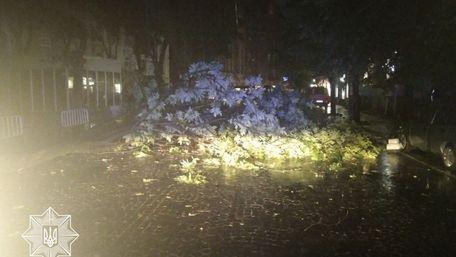 Повалене дерево перекрило рух на вул. Князя Романа у центрі Львова