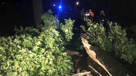 Двоє людей загинули під час буревію у Стрийському парку