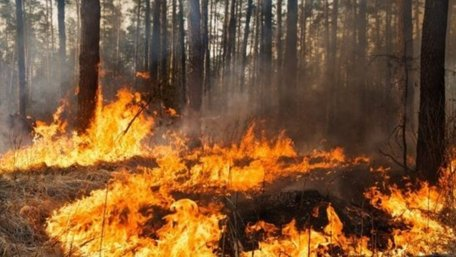 Мешканець Тернопільщини заплатить 175 тис. грн за підпал лісу