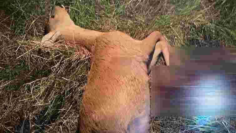 За вбивство двох косуль на Волині затримали браконьєрів