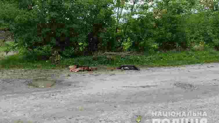 У селі неподалік Луцька 66-річний чоловік застрелив двох сусідських собак