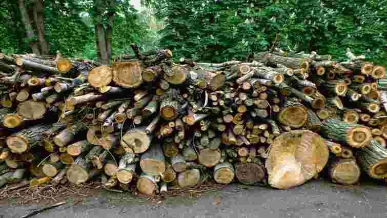 Чернівецький лісгосп сплатить понад 3 млн грн за незаконну вирубку дерев