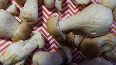 Італійська паста зі свіжими білими грибами. Рецепт дня