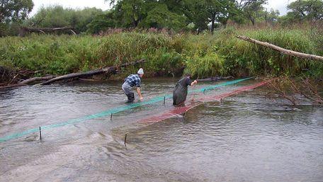 На Одещині затримали браконьєрів, які наловили риби на 1,7 млн грн