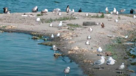 У Дніпрі посеред річки раптово з'явився новий острівець