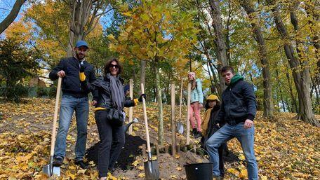 У Стрийському парку висадили майже 400 саджанців замість повалених буревієм дерев