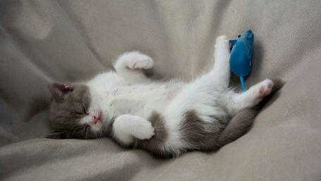 Чому ваш кіт приносить вам мертвих мишей?