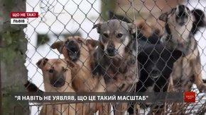 «Волонтери часто витрачають тисячі гривень на утримання однієї чи декількох собак»