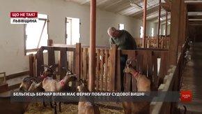 Конфлікт із фермою «Шеврет»: чи доведеться купувати козам навушники?