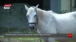 З викупленим мерією конем Орликом у  парку «Знесіння» поселили ще двох козенят