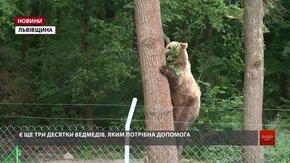 У притулку «Домажир» для ведмедів створюють умови дикої природи
