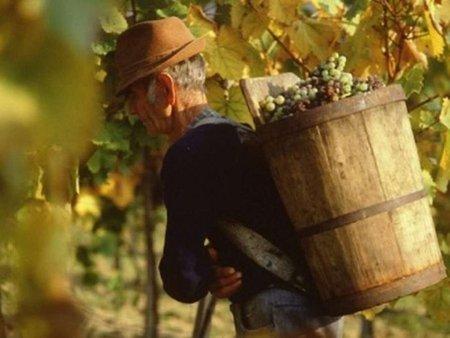До Львова з'їдуться винороби з Угорщини