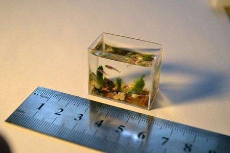 У Львові відкрилася виставка міні-акваріумів