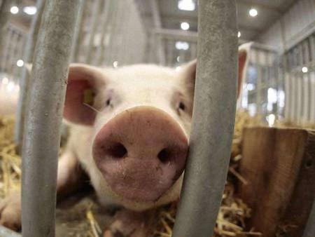 Росія обмежила ввезення свинини з Євросоюзу