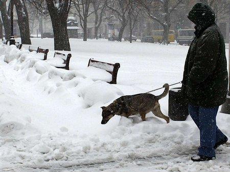 В Україну йде потепління: до кінця тижня буде плюсова температура