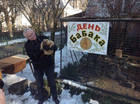 Львівський бабак Мишко напророкував весну аж на квітень