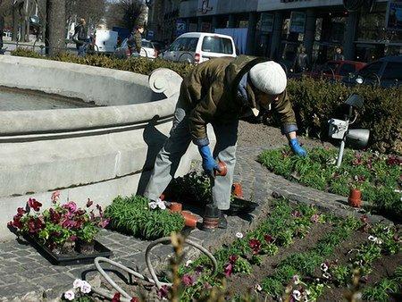 У центрі Львова з клумб крадуть квіти