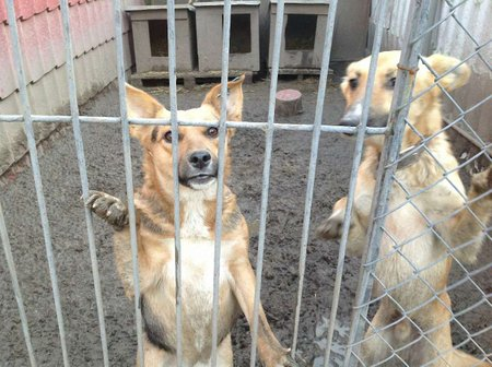 На проект притулку для собак у Львові виділять 850 тис. грн