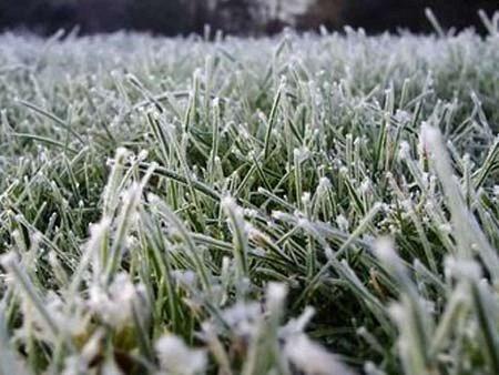 Львів'ян попереджають про заморозки