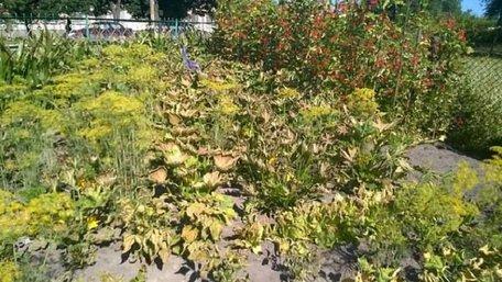 Мешканці Радехова б'ють на сполох через витік хлору і всихання рослин на городах