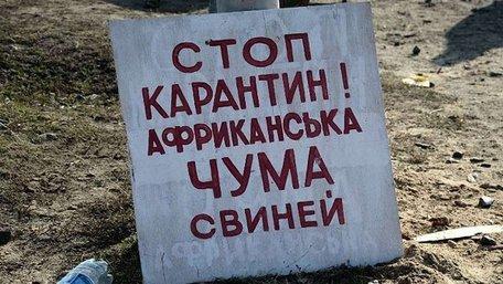 В Одеській та Чернігівській областях зафіксували спалахи африканської чуми свиней