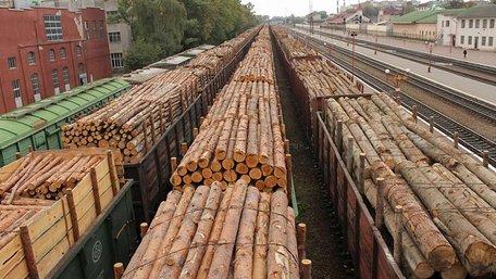 Держлісагентство оприлюднило шокуючі дані про масштаби вирубки лісів