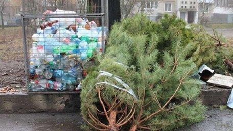 У Львові новорічні ялинки прийматимуть на утилізацію