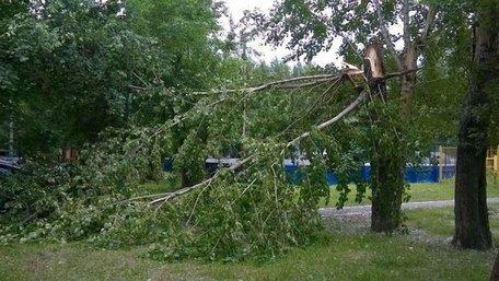 Зламана сильним вітром гілка вбила мешканця Борислава
