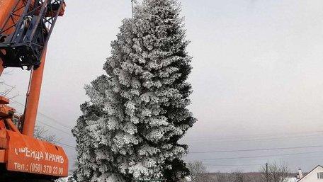 20-метрову головну новорічну ялинку Львова зрубали біля Брюховичів. Фото дня