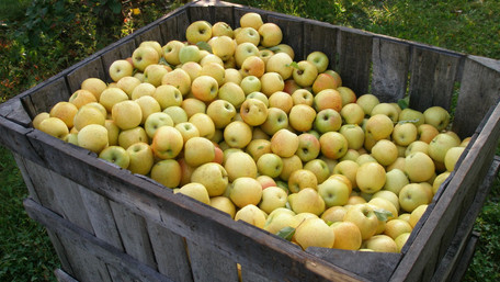 57-річна львів'янка заразилася лептоспірозом через немите яблуко