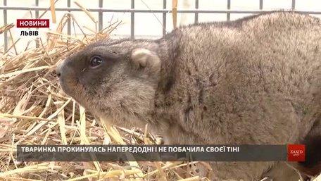 Львівська бабачиха Маруся пророкує теплу весну вже за чотири тижні