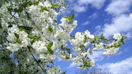 Цьогорічна весна в Україні буде теплішою, ніж зазвичай