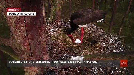 Львівські орнітологи встановлять 11 фотопасток у гніздах чорних лелек