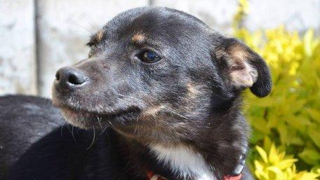 Як взяти собаку з вулиці без ризику для життя