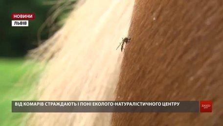 Науковці пояснили причину аномального нашестя комарів на Львівщині
